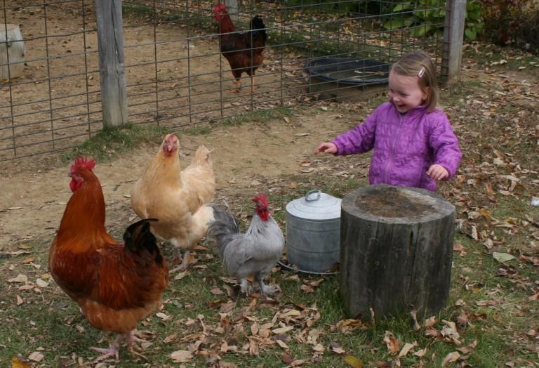 Raising Chickens Around Children: What's the Real Risk?